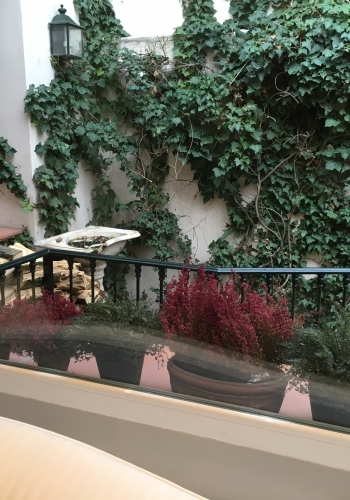 Ventanas con plantas del proyecto de reforma Mimosa de Libia Bárcenas